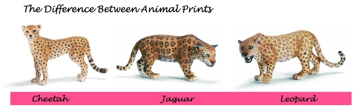 a comparison of the jaguar and leopard Jaguar vs leopard vs cheetah animal print chart people calling their leopard find this pin and more on spicy cheetah by tiger comparison chart.