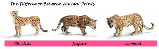 {Test your animal print IQ} Learn the difference between animal prints on City Southern Blog! city southern.wordpress.com