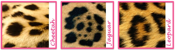 {Animal Print Cheat Sheet} Learn the difference between animal prints on City Southern Blog! city southern.wordpress.com