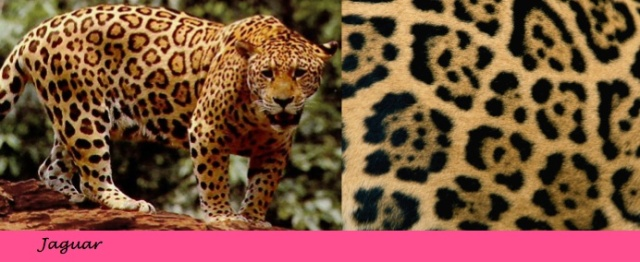 {Jaguar Print} Learn the difference between animal prints on City Southern Blog! city southern.wordpress.com