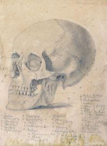 Skull aged WikimediaCommons